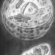 Cell Drawing black and white