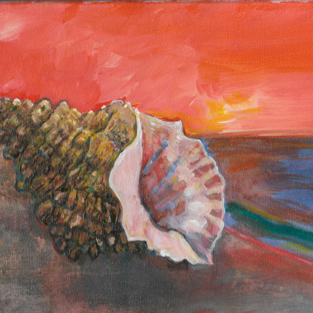 Orange Seashell