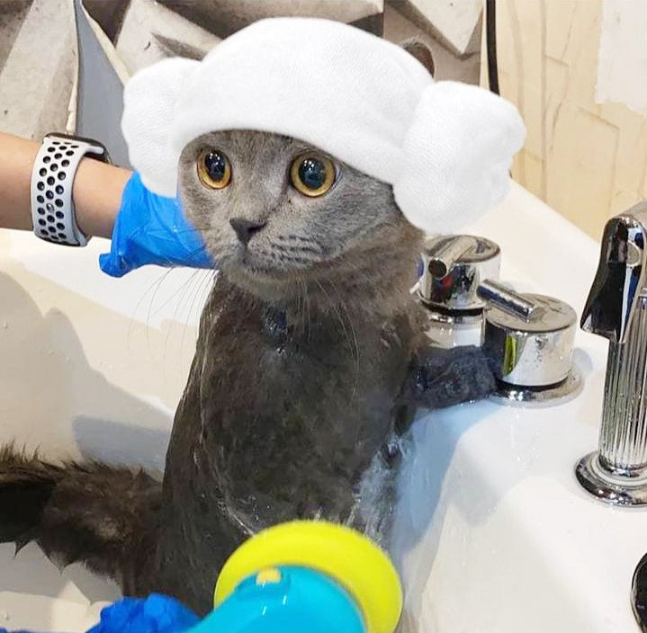 Package of 4 Basic CatGrooming