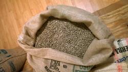green beans in bag no feet hi res