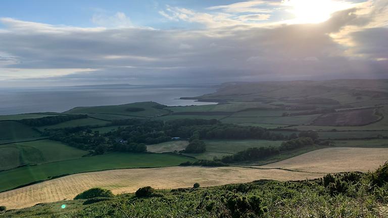Dorset roam around