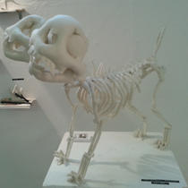 Two Headed Pug Skeleton