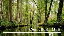 Consultoría para Comité MaB