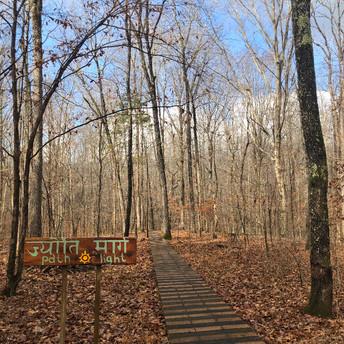 Gray Bear Woods.jpeg