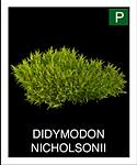 DIDYMODON-NICHOLSONII.png