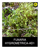 FUNARIA-HYGROMETRICA-AD1.png
