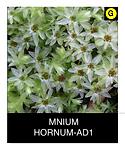 MNIUM-HORNUM-AD1.png