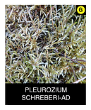 PLEUROZIUM-SCHREBERI-AD.png
