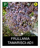 FRULLANIA--TAMARISCI-AD1.png