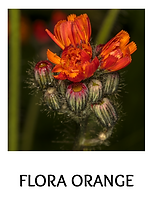 FLORA ORANGETXT.png