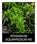 SPHAGNUM-SQUARROSUM-AD.png