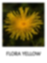 FLORA-YELLOW.png