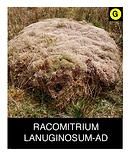 RACOMITRIUM-LANUGINOSUM-AD.png