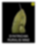 SYNTRICHIA-RURALIS-WM2.png