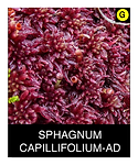 SPHAGNUM-CAPILLIFOLIUM-AD.png