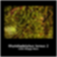 Rhytidiadelphus loreus 2.png