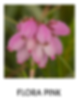 FLORA PINK TXT.png