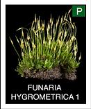 FUNARIA--HYGROMETRICA-1.png