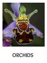 ORCHIDS-MG0682.png