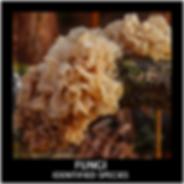 Fungi-Identified.png