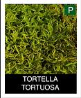 TORTELLA-TORTUOSA.png