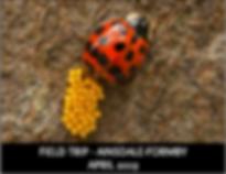 AINSDALE-APR19_41478.png