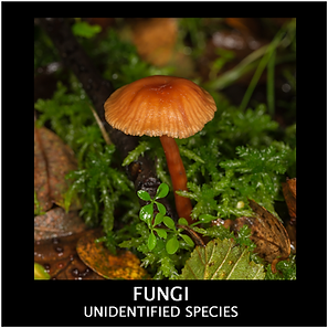 FUNGI-UNIDENTIFIED.png