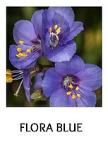FLORA-BLUE.png
