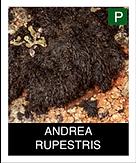 ANDREA-RUPESTRIS-.png