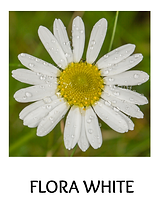 FLORA-WHITE.png