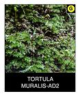 TORTULA-MURALIS-AD2.png
