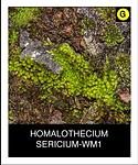 HOMALOTHECIUM-SERICIUM-WM1.png