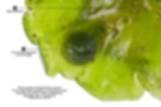 BTP5DB_31477--PEWLEPIP-1.png