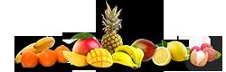 fruit-exo.png