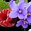 Thumbnail: Framboise et Violette