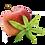 Thumbnail: Pomme Verveine