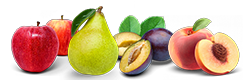 fruit-du-verger.png