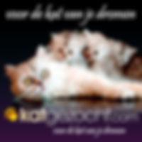 Bengaal Cattery - Links 1.jpg
