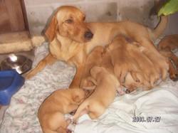 Georgia 9 pups