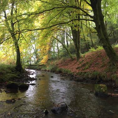 A stream providing life