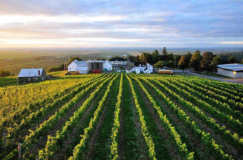 Canadian Vineyard.jpg