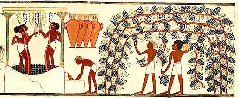 Wine in Egypt.jpg