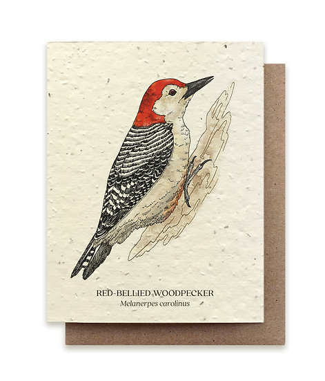 Red-Bellied Woodpecker Plantable card