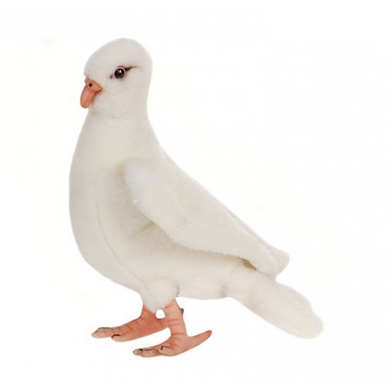 Hansa Dove
