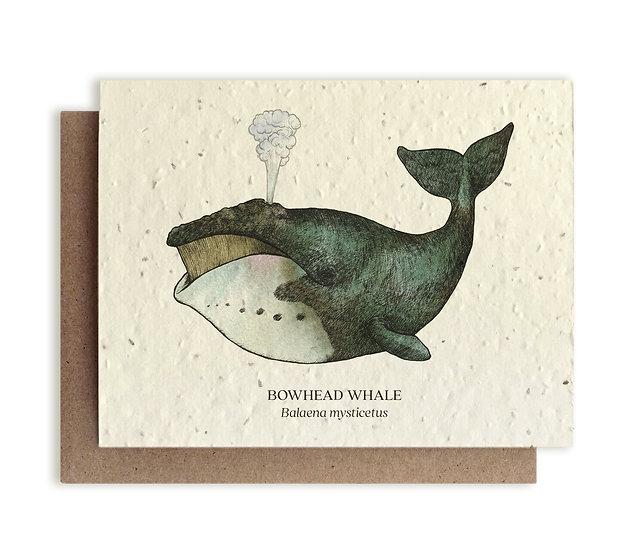 BowHead Whale Plantable card