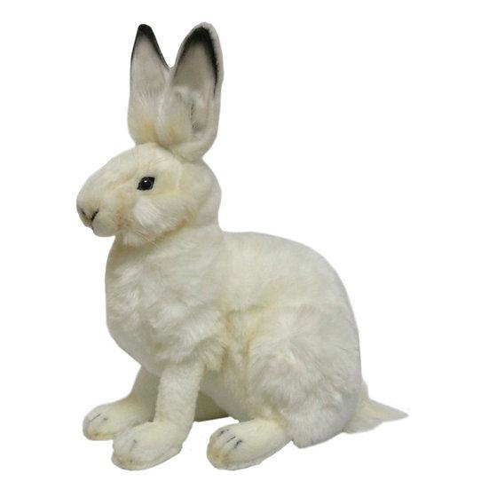 Hansa Hare