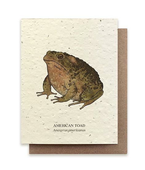 American Toad Plantable card