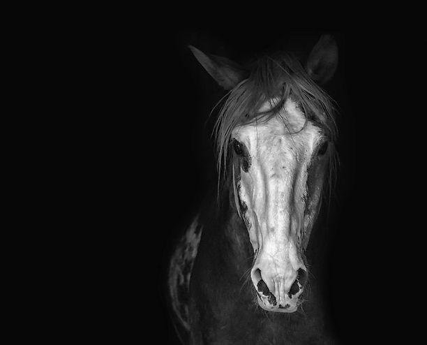 horse-3198112.jpg
