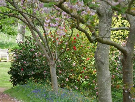 Mottistone Gardens & Estates