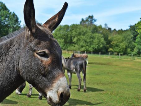 The Donkey Sanctuary, Isle of Wight